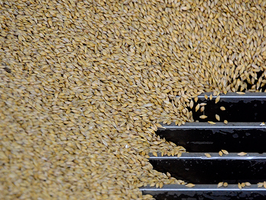 Pedigree seed cleaning